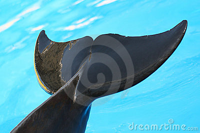 Tail of a dolphin.