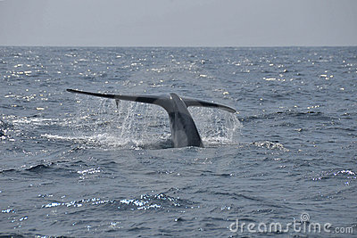 The tail of whale