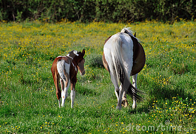 Tails Of Two Horses!