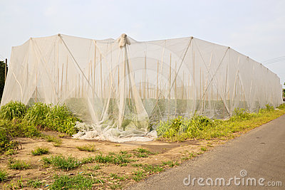 Taiwan net room farming