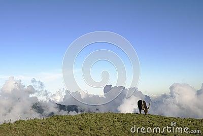 Taiwan Sambar on The Grassland