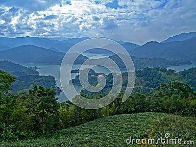 Taiwanese Tea Plantation