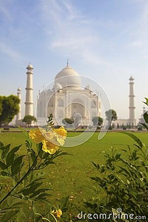 Taj Mahal and a pretty yellow flower.