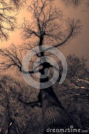 Tajemniczy drzewo