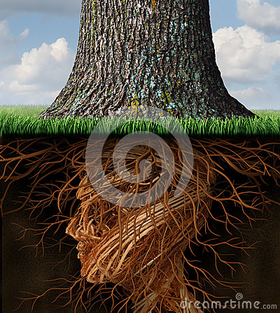 Take Root Stock Images Image 35165824