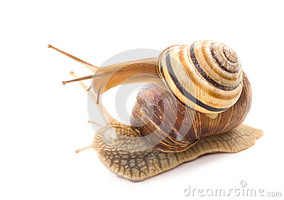 Talk of two snails