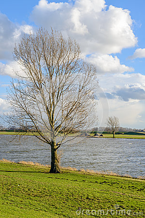 Free Tall Leafless Tree On The Banks Of A Wide River Royalty Free Stock Photo - 79733865