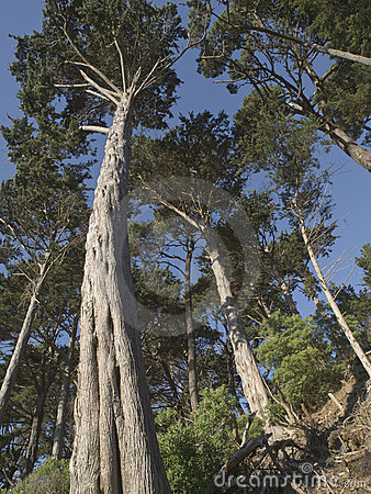 Tall Leaning Trees