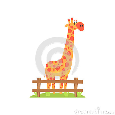 Free Tall Orange Giraffe With Hexahedron Shaped Spots Standing On Green Grass Patch In Open Air Zoo Enclosure Royalty Free Stock Photography - 80552057