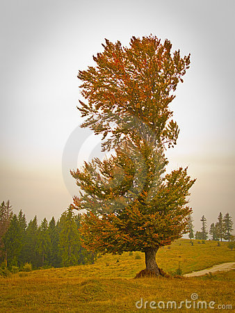 Tall tree in fall