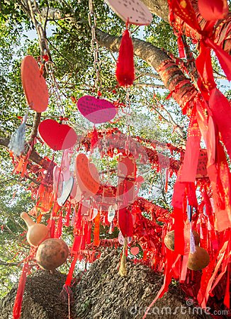 Free Tall Trees Is Completely Decorated With Red Ribbons. Many Red Ribbons Tied To Trees. Asia Royalty Free Stock Image - 108924566