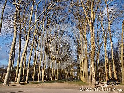 Tall trees in line inside public garden