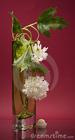 Tall vase with white flower and sweet on pink