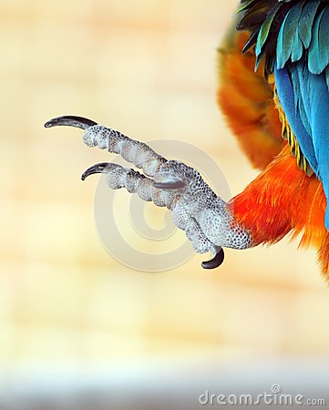 Free Talons Of A Parrot Stock Photography - 28923722
