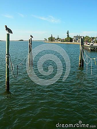 Tampa coastline