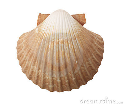 More similar stock images of ` Tan Radial Sea Shell `