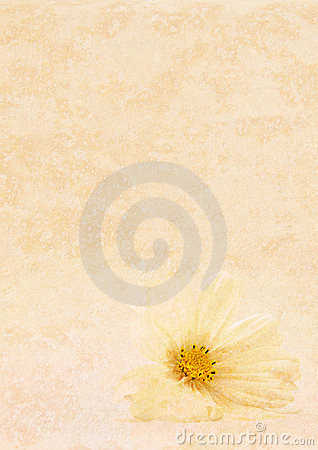 Tan texture and white flower