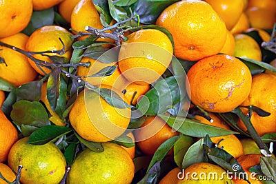 Tangerinen bär fruktt nära övre