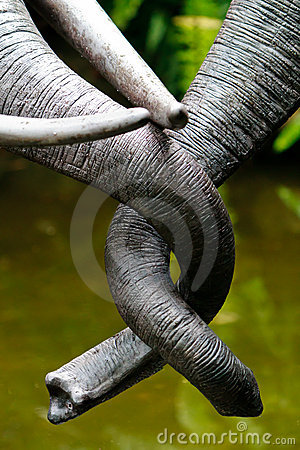 Tangled Trunks