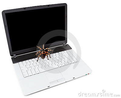 Tarantula placed on a portable laptop