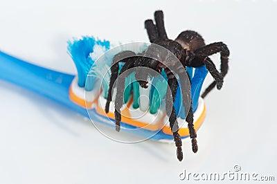 Tarantula on toothbrush