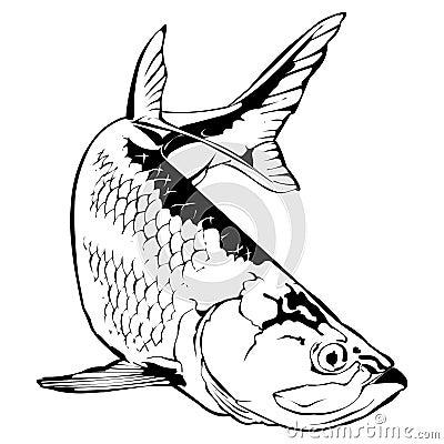 Tarpon Illustration Stock Vector - Image: 70158276