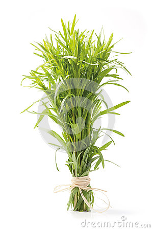 Tarragon herb bunch