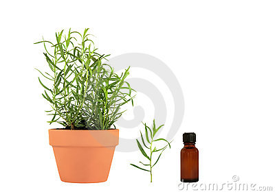 Tarragon Herb Essential Oil