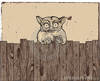Tarsier with wooden fence