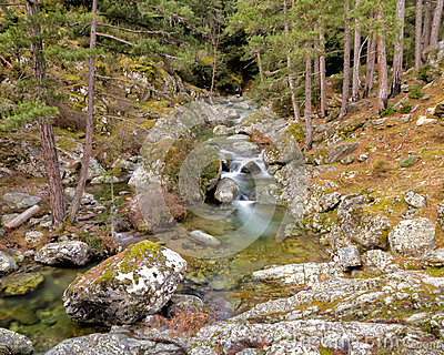 The Tartagine river near Mausoléo in Corsica