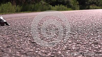 Tartaruga che attraversa la strada video d archivio