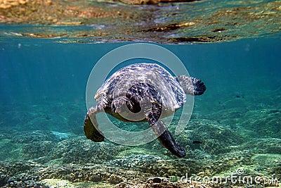 Tartaruga de mar subaquática