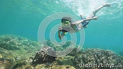 Tartaruga marina sulla barriera corallina e sullo sfondo di pesci tropicali Vista sottomarina donna che fotografa tartaruga e pes archivi video