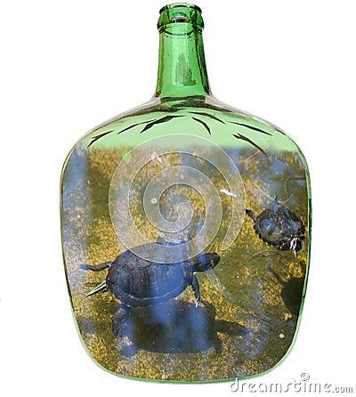 Tartarughe in una damigiana di vetro fotografia stock for Contenitore per tartarughe