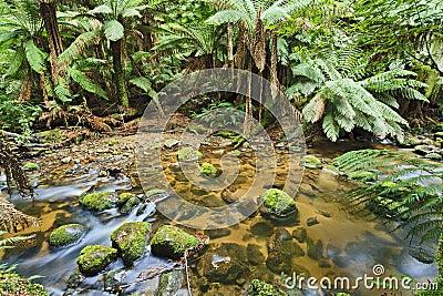 Tasmania Columba Creek horizontal