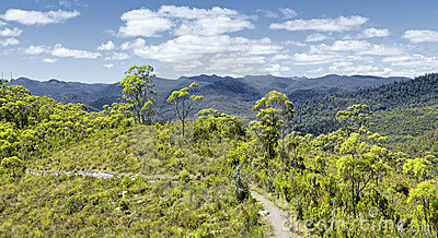 Tasmania rain forest