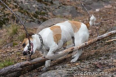 Tasty branch