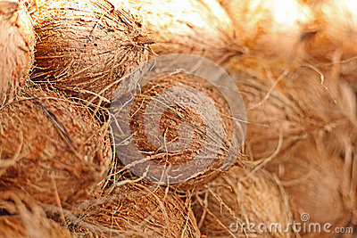 Coconuts at local market