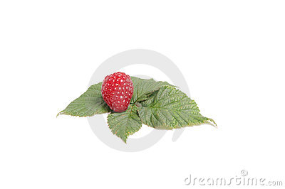 Tasty raspberry on the green leaves.
