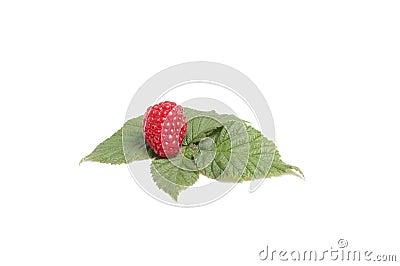 Tasty raspberry on the green leaves.