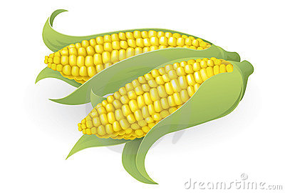 Tasty sweetcorn illustration