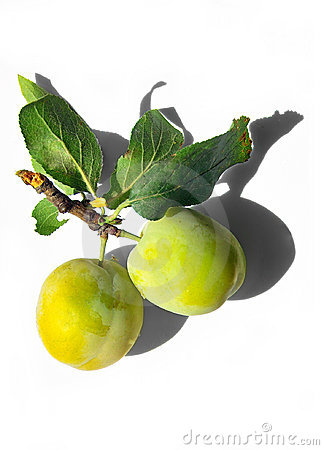 Tasty yellow plums