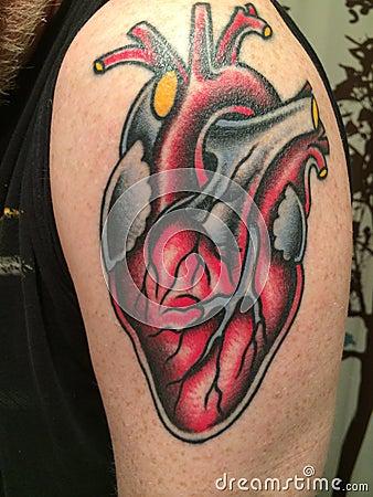 Tatouage anatomique de coeur image ditorial image 42724150 - Tatouage de coeur ...