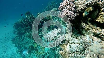 Tauchen auf einem tropischen Riff Warmes tropisches Meer stock video footage