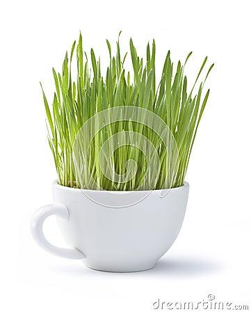 Taza del blanco de la hierba verde