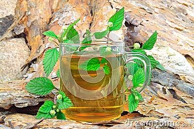 Tea with Aztec Sweet Herb