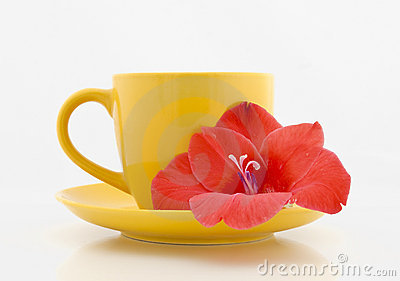 Tea cup with flower on a white background