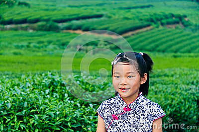 In the tea garden of Asian girls
