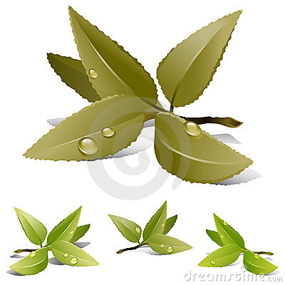 Free Tea Leaves Royalty Free Stock Photography - 9951727