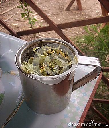 Tea of linden-tree s flowers